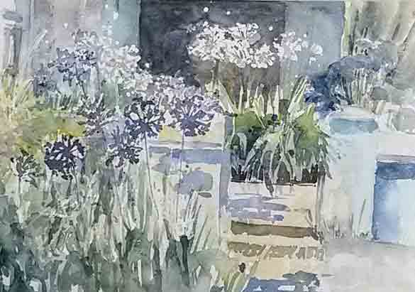 Agapanthus at the Mutton Shop by Penny Newman