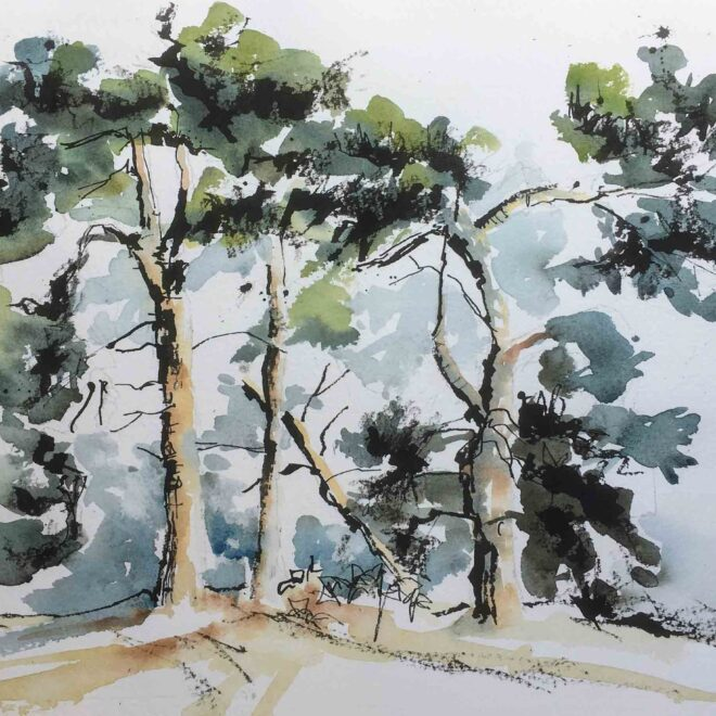 Breckland trees at Knettishall by Penny Newman